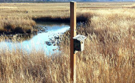 kenteken vogelhuisje in Alaskan marsh Stockfoto