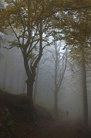 a person walks in the misty forest in autumn photo