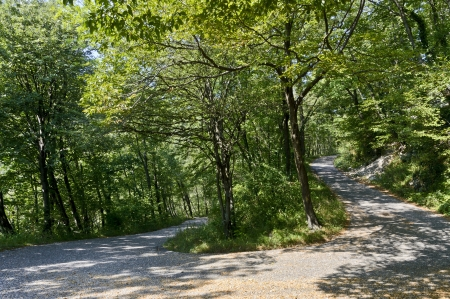 pedestrian and bicycle path in the wood - Italy Stock Photo - 15141185