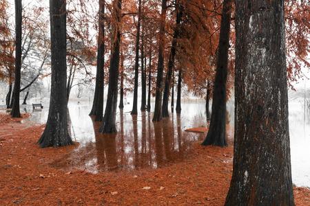 overflow: Lake of Varese overflow in the public park Zanzi, Schiranna Stock Photo