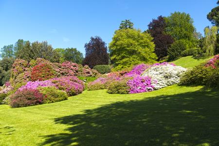 parchi e giardini con alberi e fiori di azalee in primavera, cielo blu sullo sfondo Archivio Fotografico
