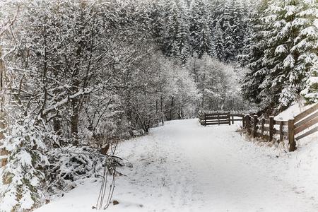 Prima neve della stagione invernale in un sentiero di montagna nel parco naturale, Italia Archivio Fotografico