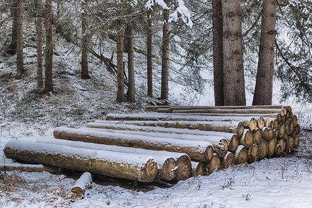 tronchi di legno in fila nel bosco innevato Archivio Fotografico