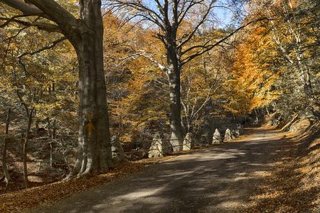 Colori freddi nella foresta parco regionale del Campo dei Fiori di Varese, stagione autunnale
