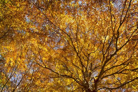 l'albero in autunno con i raggi del sole che passa attraverso i rami Archivio Fotografico