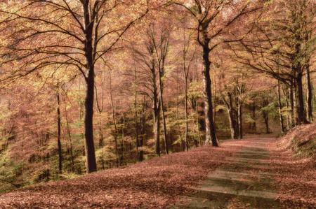 stagione autunnale, i colori e le sfumature della natura nella foresta