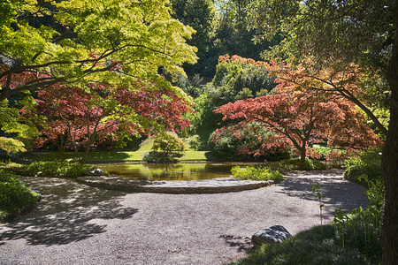 Japanese botanical garden with small pond and many varieties of trees