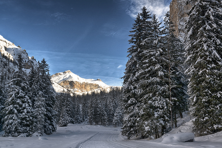 path and trees in the snowy forest with mountain an clouds in background, Gardena Valley - Dolomiti, Trentino-Alto Adige Archivio Fotografico