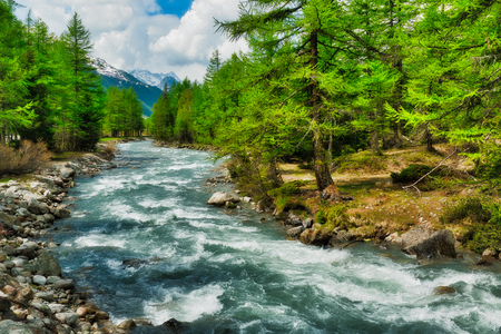 river among the trees in the mountains of the Valle d'Aosta during the melting snow in spring, Italy