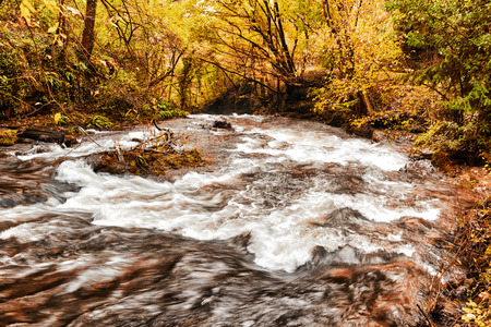 rapids of the stream in the forest during the autumn season Standard-Bild