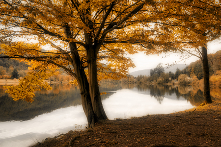 quiet landscape in a foggy afternoon of autumn on the Ghirla lake near the city of Varese