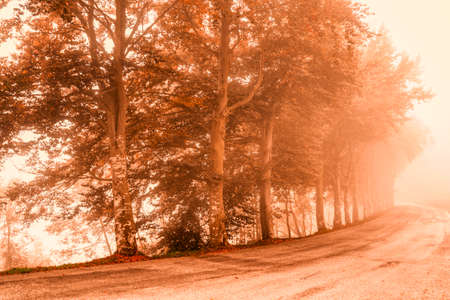 road in the fog with row of trees in autumn season Standard-Bild