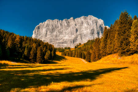 the majestic rock face of the Sassolungo with a frame of autumn colors, Gardena valley, Dolomites 版權商用圖片