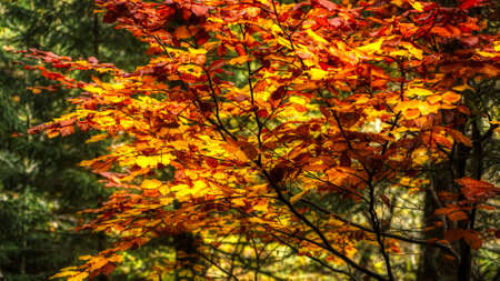 bright colors of the plants in autumn season