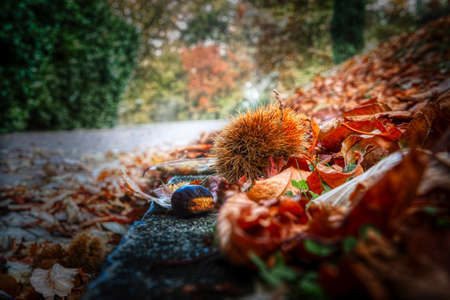 chestnut with hedgehog on the road in the forest, autumn season