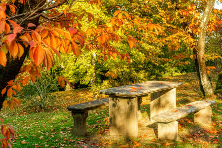 two benches and stone table in the woods, autumn season Standard-Bild