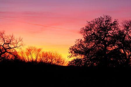 brilliant colors: Brillantes colores de una puesta de sol Nuevo Mexico con las siluetas de �rboles Foto de archivo
