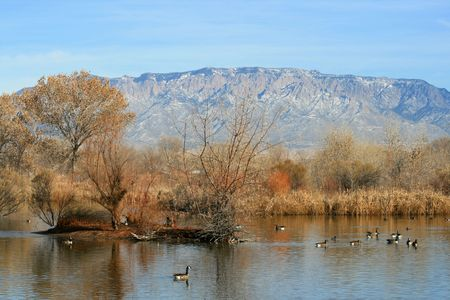Scenic lake view with geese, ducks and mountains in the background Imagens