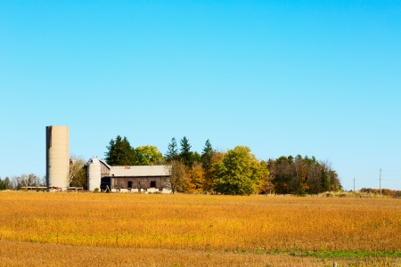battered land: Old farm buildings in countryside in south Ontario