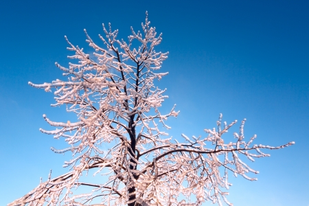 ice crust: Tree covered with an ice crust against bright blue sky Stock Photo
