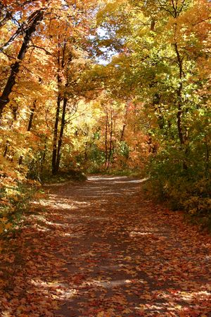 Down the Fall Path - East Canyon Reservoir