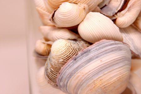 Seashells in a Glass Horizontal