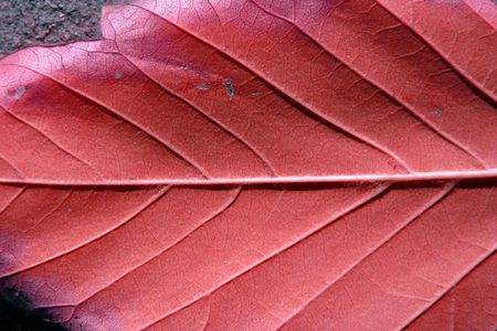 ral: Close up on a Leaf