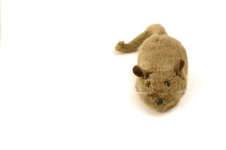 Isolated Toy Mouse photo