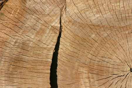 dilsiz: Close up on a Tree Trunk Stock Photo