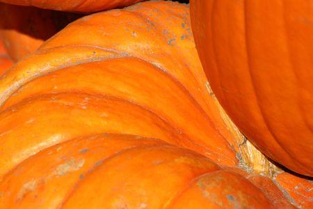 Close up on a Pumpkin Texture