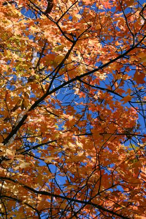 dilsiz: Close Up Leaves  - East Canyon Reservoir Stock Photo