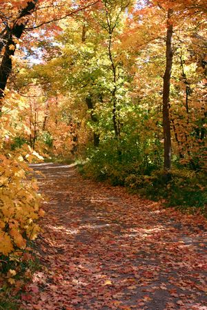 dilsiz: Down the Fall Path - East Canyon Reservoir