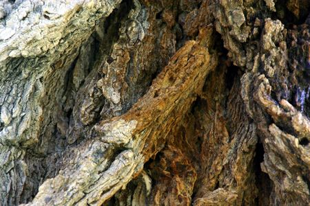 Close up on a Tree Trunk Stock Photo