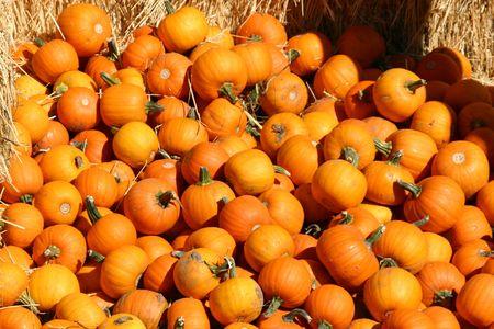 Miniature Pumpkins on a Haystack