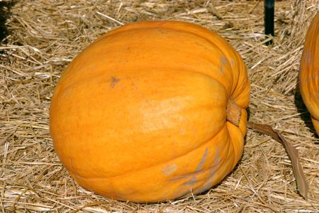 Close up on a Single Pumpkin Stock Photo