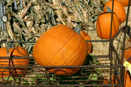 dilsiz: Pumpkin in a Flower Stand in a market