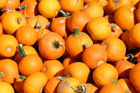 Close up on a Mini Pumpkins