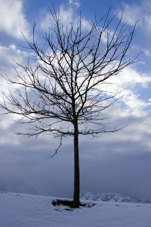 Close up on a Lonely Tree in Winter