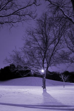 Vertical Shot of Trees with the hill on the back in Winter Time Stock Photo - 284915