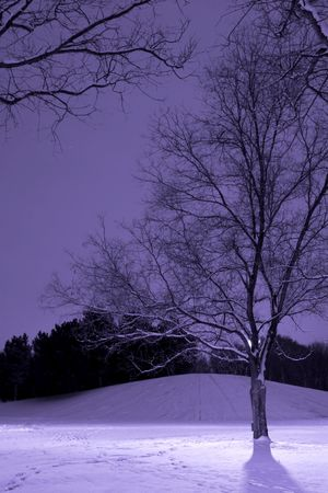 Vertical Shot of Light Post behind the Tree, Winter Scene