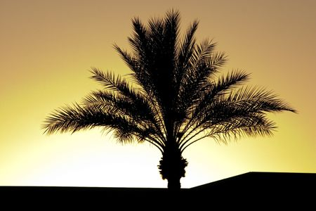 Palm Tree Silhouette During Sunset photo