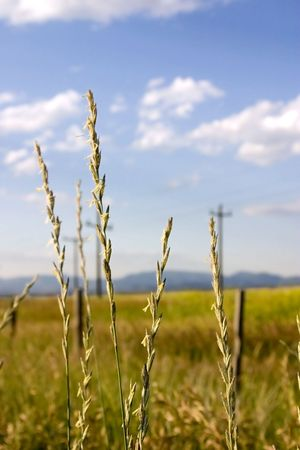 Field in Helena Montana with Focus on the Weeds close by and Blue Skies on the Background Stock Photo - 466342