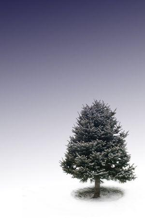 one tree under bluebackground photo
