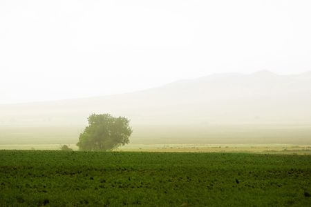 Tree behind a farm in rural Utah photo