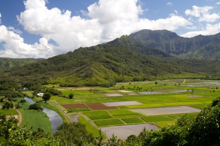 View of cultivated fields in Kauai island from hilltop with lush mountains in background