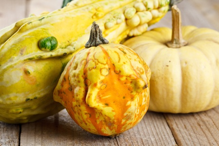 Assorted composition of colorful and decorative mini pumpkins photo