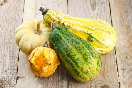 Assorted composition of colorful and decorative mini pumpkins Stock Photo