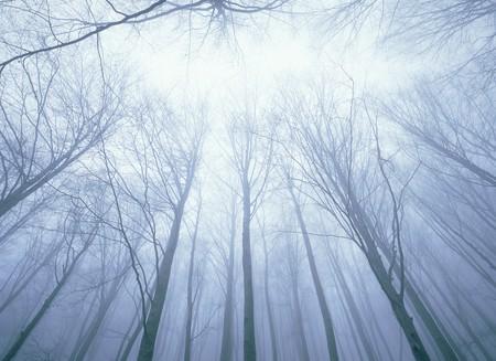 mediterranean forest: Mediterranean forest Stock Photo