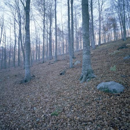 Mediterranean forest photo