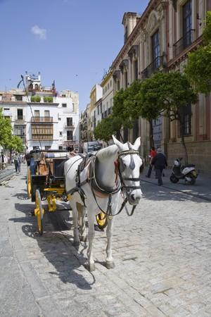 Horsedrawn carriage on the road, Seville, Spain photo
